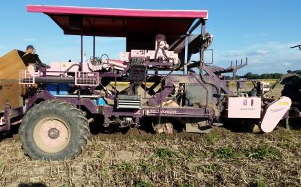 Onion harvester